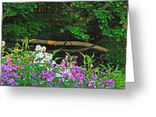 Phlox Along The Creek 7185 Greeting Card