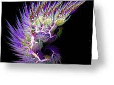 Phoenix's Wing Greeting Card