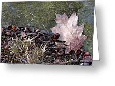 Photo Watercolour Leaf Against Rock Greeting Card