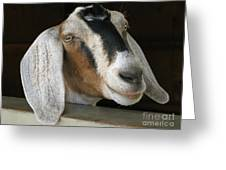 Photogenic Goat Greeting Card