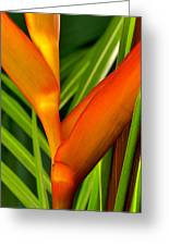 Photograph Of A Parrot Flower Heliconia Greeting Card
