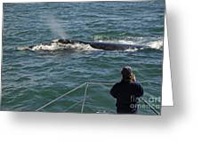 Photographer On Whale Watching Boat Greeting Card