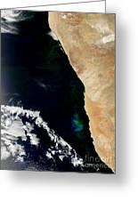 Phytoplankton Bloom Off Nambia Greeting Card