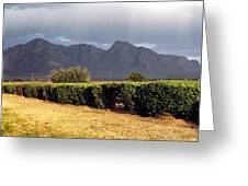 Picacho Peak Hedge Greeting Card
