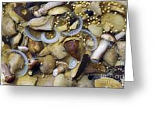 Pickled Mushrooms Greeting Card by Michal Boubin