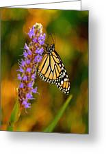 Picky Monarch Greeting Card