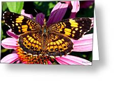 Picture Perfect    Butterfly 003 Greeting Card