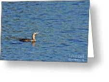Pied-billed Grebe Looks Up Greeting Card by Lynda Dawson-Youngclaus