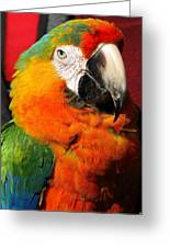 Pietro The Parrot Greeting Card