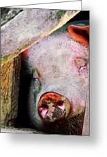 Pig Sleeping Greeting Card