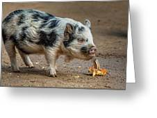 Pig With An Attitude Greeting Card