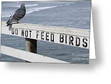 Pigeons Cannot Read Greeting Card
