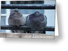 Pigeons Perching Greeting Card