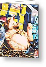 Piggy And Piglets In Store Window Greeting Card