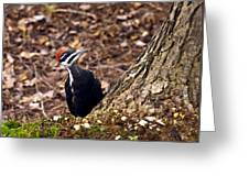 Pileated Woodpecker 3 Greeting Card