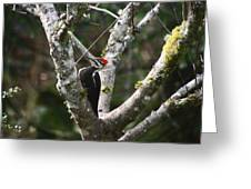 Pileated Woodpecker In Cherry Tree Greeting Card