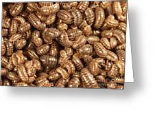 Pill Bugs Greeting Card