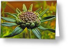Pinchshin Bud Greeting Card