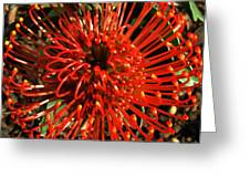Pincushion Detail Greeting Card