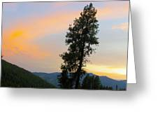 Pine And A Painted Sky Greeting Card