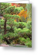 Pine And Autumn Colors In A Japanese Garden II Greeting Card