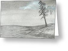 Pine And Birch Greeting Card by Robert Meszaros