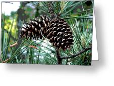 Pine Cone 2 Greeting Card