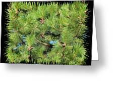 Pine Cones And Needles Greeting Card