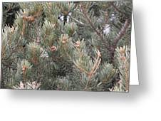 Pine Love Greeting Card