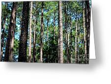 Pine Patch Greeting Card