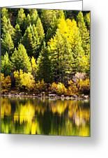 Pine Reflection At Georgetown Lake Colorado Greeting Card
