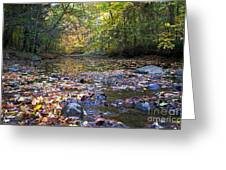 Pine River In Fall Greeting Card