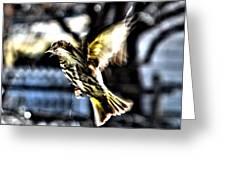 Pine Siskin In Flight Greeting Card