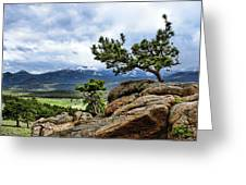 Pine Tree And Mountains Greeting Card