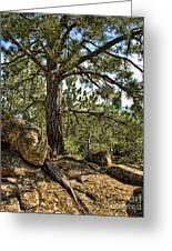 Pine Tree And Rocks Greeting Card
