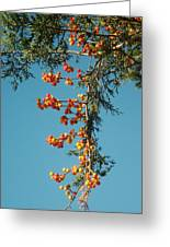 Pine Tree With Berries Greeting Card