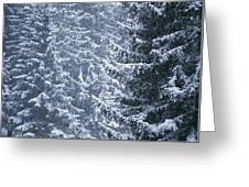 Pine Trees Covered In Snow, Les Arcs Greeting Card