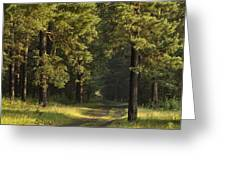 Pine Trees Forest Greeting Card