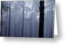 Pine Trees In Cloud In The Forest Corona Greeting Card