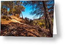 Pine Trees In El Chorro. Spain Greeting Card