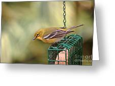 Pine Warbler 3 Greeting Card