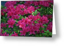 Pink Along The Fence Greeting Card