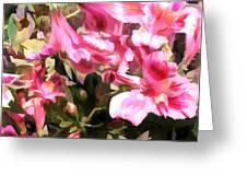 Pink Alstroemeria  Greeting Card