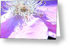 Pink And Blue Flower Greeting Card
