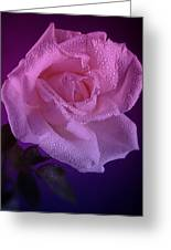 Pink And Blue Rose In The Rain Greeting Card