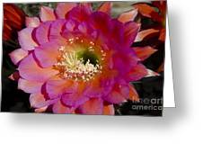 Pink And Orange Cactus Flower Greeting Card