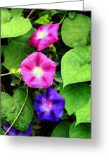 Pink And Purple Morning Glories Greeting Card