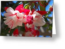 Pink And Red Fuchsia Greeting Card