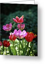Pink And Red Tulips Greeting Card