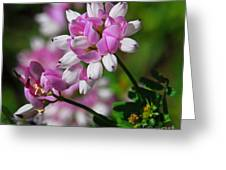 Pink And White Greeting Card